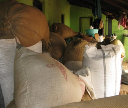 Achieving Global Food Security by Reducing Post Harvest Food Loss - Featured Photo