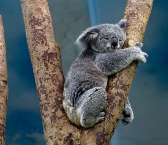 Koalas' Treehouse Infants - Featured Photo