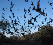Austin Bat Refuge: Providing Education and Conservation for Bats in North America's MissionBox Cover Photo
