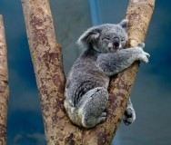 Koalas' Treehouse Infants - Featured Photo