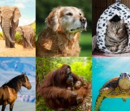 MissionBox August 2018 $2,500 Grant Award: Honoring Animal Rights and Animal Rescues's MissionBox Cover Photo