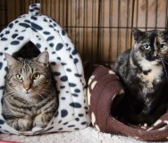 Second Chance Sheridan Cat Rescue - Featured Photo