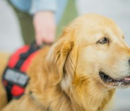 Service Dogs Alabama: School Dogs Pilot Program - Outcomes's MissionBox Cover Photo