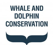 Whale and Dolphin Conservation - Featured Photo