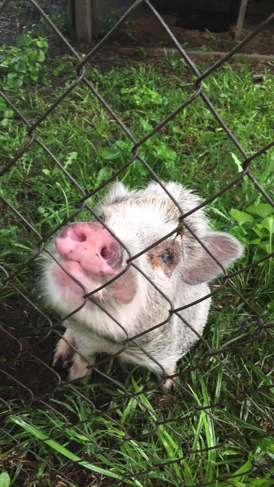 Grace Farm Animal Rescue and Sanctuary | Nonprofit - MissionBox
