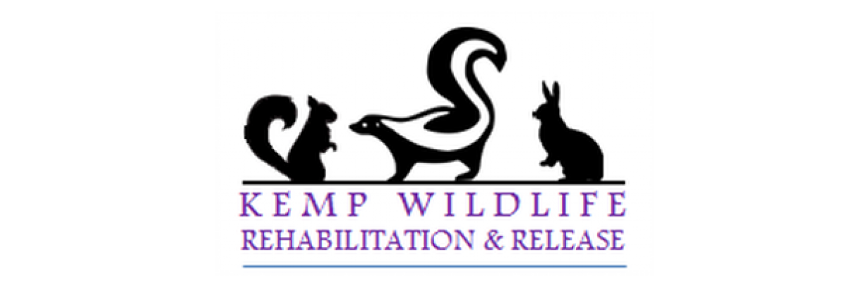 Kemp wildlife Rehabilitation and release Inc's MissionBox Cover Photo