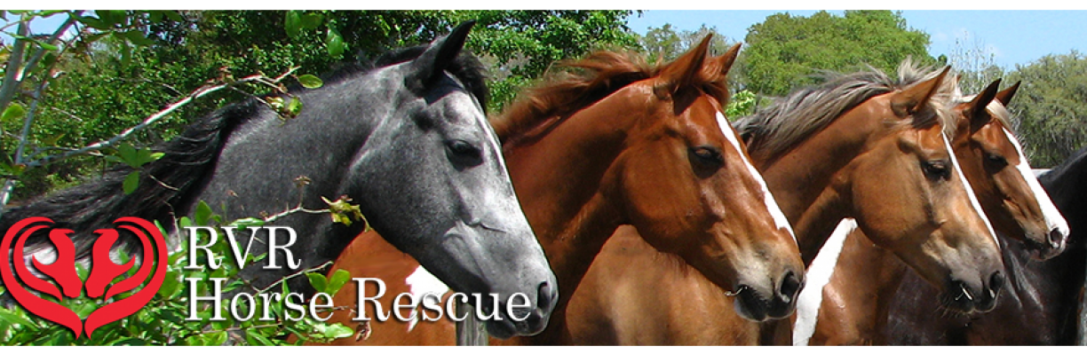 RVR Horse Rescue - Featured Photo