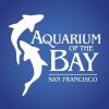 bay.org