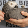 Burge Bird Rescue
