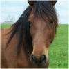 Grey Oaks Equine sanctuary