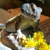 HerpHaven Reptile Rescue and Sanctuary