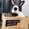 Kalamazoo Rabbit Rescue