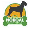 NorCal Boxer Rescue