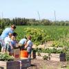 Oak Valley Youth Garden